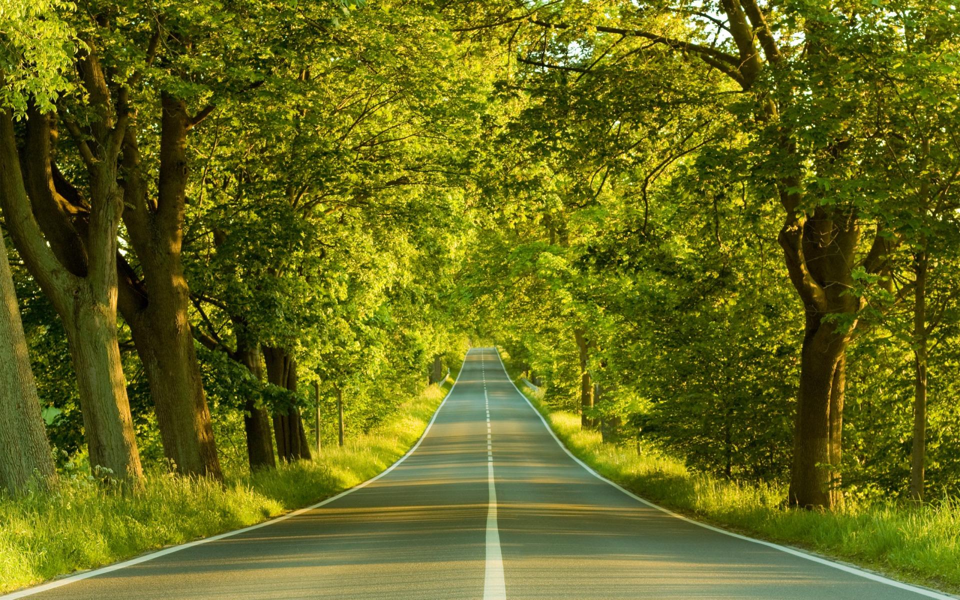 Across-forest.jpg